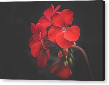 Cerise Beauty Canvas Print