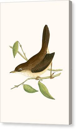 Cetti's Warbler Canvas Print by English School
