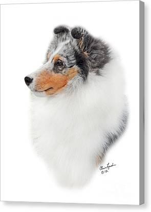 Shetland Sheepdog Canvas Print - Ch Kismet For The Record-1 by Chris Lynch