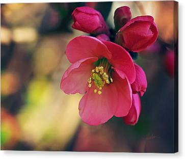 Canvas Print featuring the photograph Chaenomeles by Kharisma Sommers