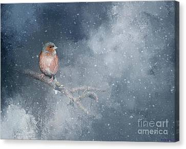 Chaffinch On A Cold Winter Day Canvas Print by Eva Lechner