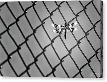 Chainlink Dragon Fly Canvas Print