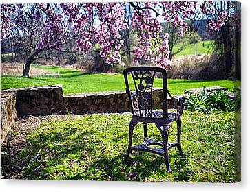 Chair In The Garden Under A Blooming Magnolia Tree Canvas Print
