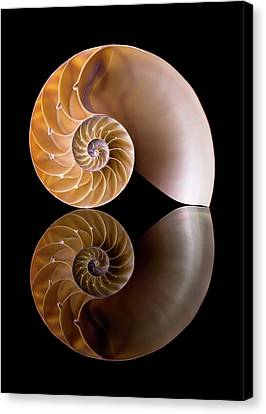 Chambered Nautilus Canvas Print by Jim Hughes