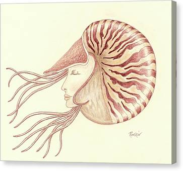 Chambered Nautilus Canvas Print by K S Rankin