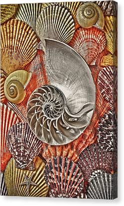 Chambered Nautilus Shell Abstract Canvas Print by Garry Gay