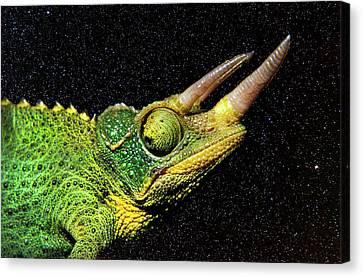 Chameleon Night Canvas Print by Sean Davey