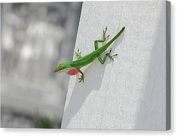 Chameleon Canvas Print by Robert Meanor