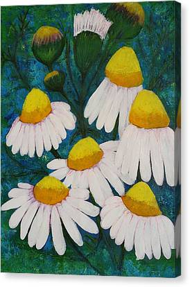 Chamomile Flowers In My Puglia Garden Canvas Print by Jean Fassina