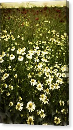 Canvas Print featuring the painting Chamomile Lawn by Frank Tschakert