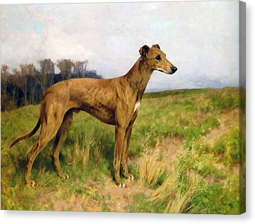 Champion Greyhound Dee Flint Canvas Print by Arthur Wardle