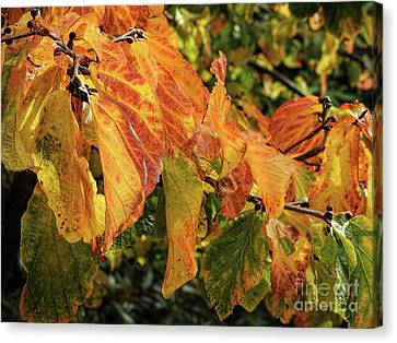 Canvas Print featuring the photograph Changes by Peggy Hughes