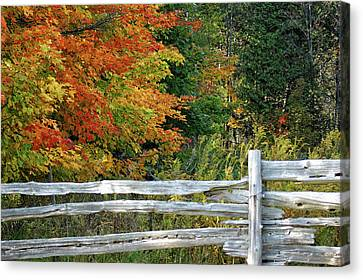 Split Rail Fence Canvas Print - Changing Leaves by Maria Keady