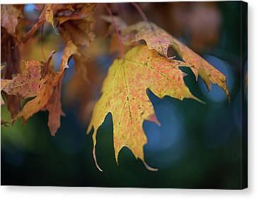 Changing Leaves Canvas Print by Rick Berk