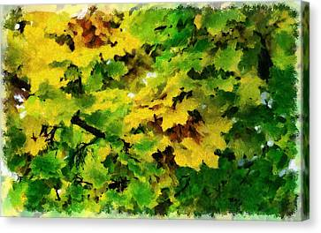 Changing Leaves Canvas Print by Russ Harris