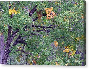 Changing Of The Seasons Canvas Print by Mary Deal