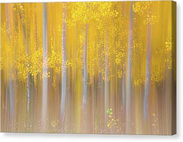 Changing Seasons Canvas Print