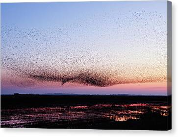 Mysterious Sunset Canvas Print - Chaos In Motion - Bird Of Many Birds by Roeselien Raimond