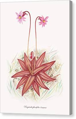 Chapman's Butterwort Canvas Print by Scott Bennett
