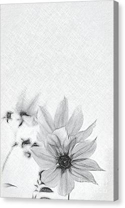 Painted Details Canvas Print - Charcoal Drawing Fully Bloomed Pink Dahlia Imperialis At Garden by Eiko Tsuchiya
