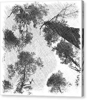 Canvas Print featuring the photograph Charcoal Trees by RKAB Works