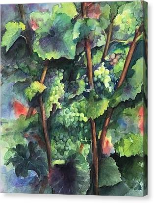 Chardonnay Dans L'ombre Canvas Print by Maria Hunt