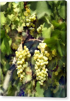 Chardonnay Canvas Print by Kurt Van Wagner