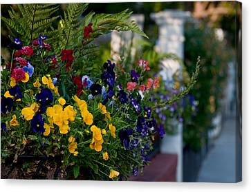 Charleston Flower Boxes Canvas Print by Melissa Wyatt