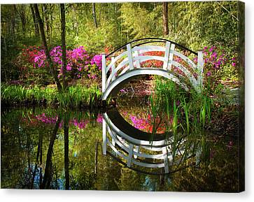 Charleston Sc Magnolia Plantation Spring Blooming Azalea Flowers Garden Canvas Print by Dave Allen