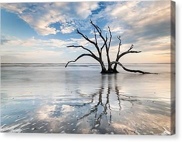 Charleston Tree In Ocean Surf Canvas Print