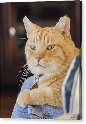 Charlie Cat Canvas Print by Allen Sheffield