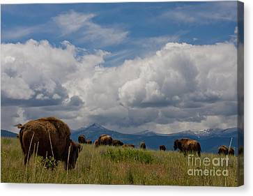 Charlie Russel Clouds Canvas Print by Katie LaSalle-Lowery
