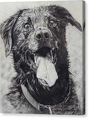 Charliedog Canvas Print by Sean Connolly