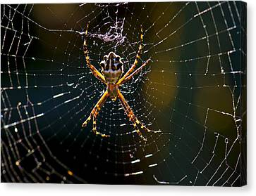 Canvas Print featuring the photograph Charlotte's Web by Thanh Thuy Nguyen