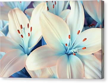 Charming Elegance Canvas Print