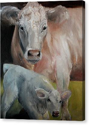 Charolais Cow Calf Painting Canvas Print by Michele Carter