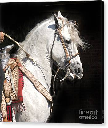 Charro Stallion Canvas Print by Jim and Emily Bush