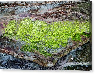 Chartreuse Abstraction Canvas Print