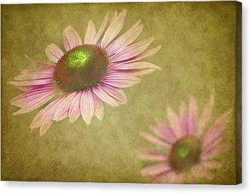 Cone Flower Canvas Print - Chase Me by Rebecca Cozart