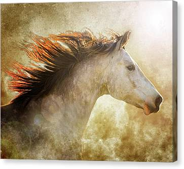 Chase The Light Canvas Print