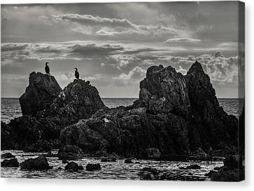 Chatting On Rocks Canvas Print