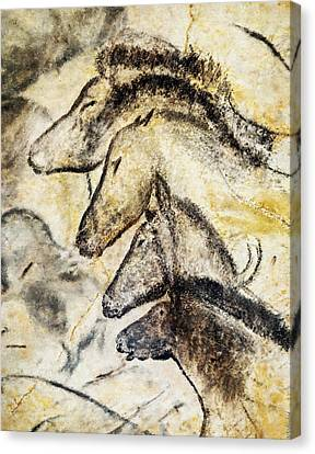 Chauvet Horses Canvas Print