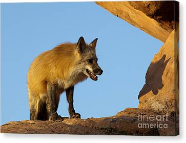 Checking My Shadow Canvas Print by Sandra Bronstein