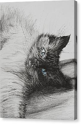 Ears Canvas Print - Cheeky Baby by Vincent Alexander Booth