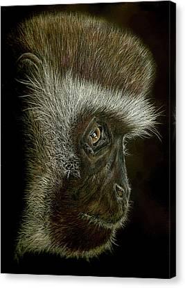 Cheeky Monkey Canvas Print by Heidi Kriel