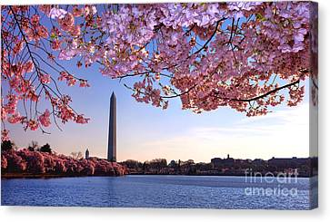 Cherry Tree Canvas Print - Cheery Cherry Dc by Olivier Le Queinec