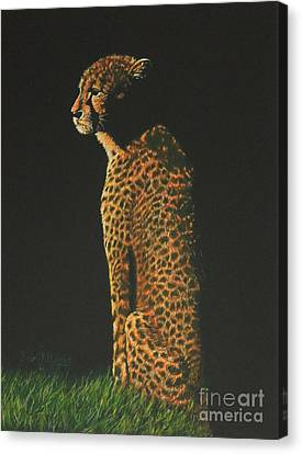 Cheetah At Sunset Canvas Print