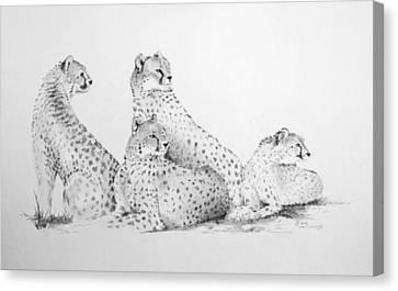 Cheetah Group Canvas Print by Alan Pickersgill