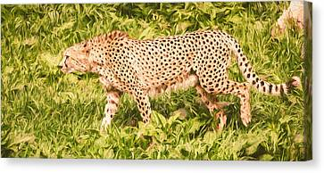 Cheetah On The Hunt Canvas Print by Pati Photography