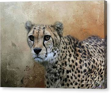 Cheetah Portrait Canvas Print